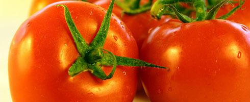 Tomate: Portugal é o 4º maior exportador mundial