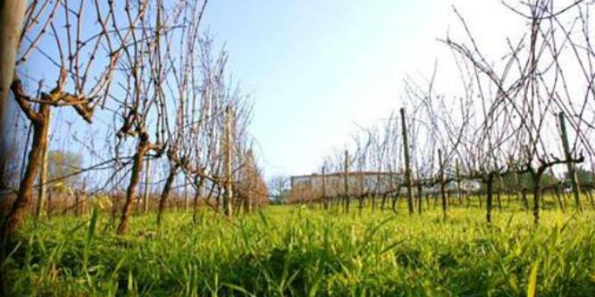 Vinhos de Lisboa aumentam 5% das vendas em 2013